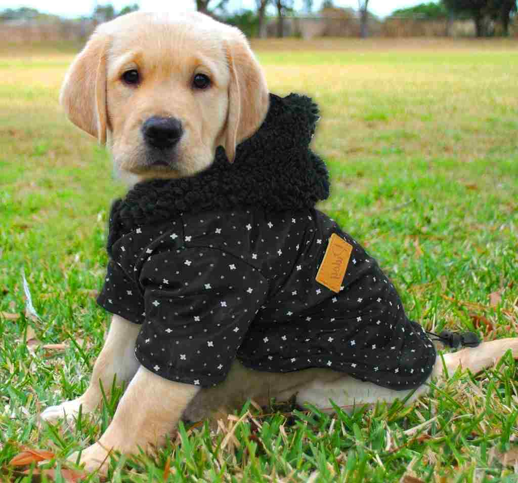 Migliori Cappotti per Cani